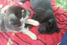 Cachorro Chorros :)