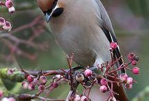 Ptaki / Przyroda