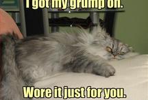 Funny Kitties & Doggies / by Reika Trimble