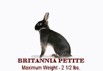 Bunny breeds / These are just some rabbit breeds and some rabbit breeds are named after there couler but not all