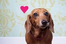 Valentine's Day / Love, Love, Love
