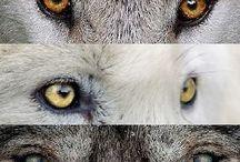 Животные( картинки и фотографии)