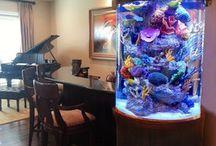 Homes aquarium