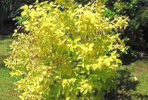 Arbustes printanier