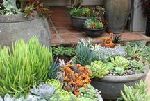 Parveke ja puutarha