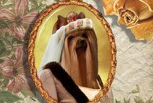 I ♥ Yorkshire Terrier