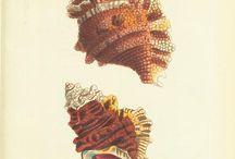 shells....my fav