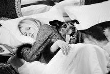Brigitte Bardot / by Eduard Planting