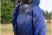 papoušci a ptáčci