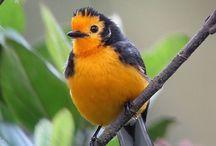 HERMOSA NATURALEZA / Animales paisajes arboles bosques flores