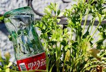 Go green / by Cinthya Cerda