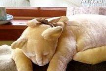 almohadas gato