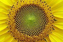 Geometry,  Fibonacci and Fractals