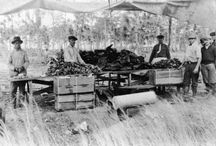 Florida Food History
