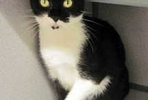 Pittsburgh Animal Rescue / Adorable adoptables in the Pittsburgh area  / by Vicki Cook