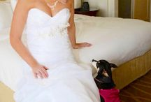 Special Occasion Dog Fashion / This is a collection of Dog special occasion Fashion!