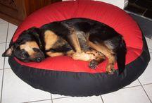 German Shepherd / Shepherds on pet beds from Barka Parka