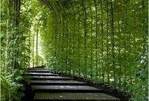 Salaiset puutarhat