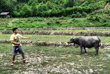 The Thailand Trek - Kuruvilla Alexander / #TravelAdventurer Kuruvilla Alexander treks to the hill tribes of Northern #Thailand for a sweet sojourn. #GrabYourDream