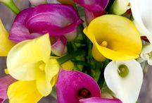 My Florist......ideas for my dream career.