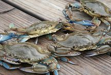 Eastern Shore Critters / Our resident animals