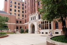 Moody Bible Institute / College / by Sarah Potter