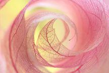 Inspiráló színek és formák