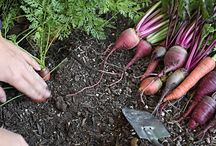 Hortus conclus / What I wish in my vegetable garden