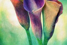 Bloemen en planten / by gerit moons