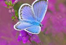 BIRDS  BUTTERFLIES FLOWERS / by Brenda Cregger