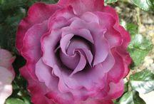 flotteste rose