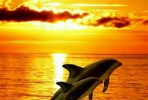 tengeri naplemente