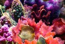 Ωκεάνια ζωή
