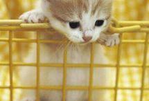 I love Cute Cats