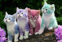 cat / Cute cat
