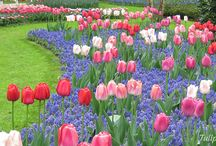 Travel {Amsterdam & Holland, Netherlands} / Travel tips for Amsterdam