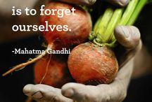 Garden Wisdom & Inspiration