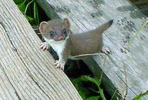 Cute! / by Lisa Ellis