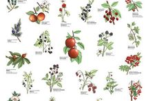 Wild fruits and berries