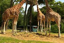 Parco Natura Viva / Il Parco Natura Viva, importante centro di tutela per le specie minacciate, si trova a Bussolengo, non lontano dal lago di Garda e dall'Hotel Mayer & Splendid.