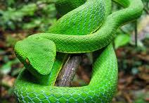 BEAUTY OF SNAKES / www.repcage.com  -> Check us man!!!