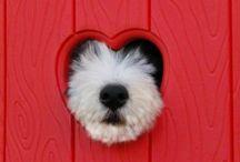 I Love Dogs Sooooooo Much / Fun faces of dogs!