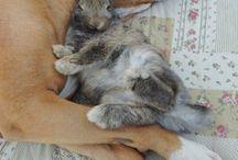 Operatie bunny