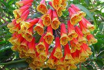 Flowers/Gardening / by Elisabeth Hofbauer