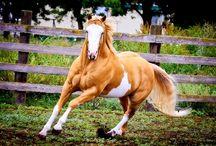 Paint Horses