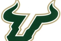 University of South Florida / by Haley Johnson