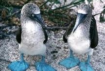 Honeymoon: Galapagos
