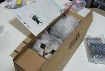 I love cats!!! <3