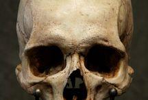 Skull Studies Refrences