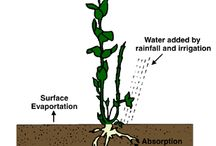 Water - Irrigation Solutions •
